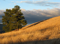 From Mt. Helena Ridge Trail,Helena,Montana. (montanatom1950) Tags: montana hiking trails helena helenamontana helenanationalforest