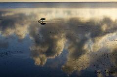 Solo bird (thanks for 650.000 hits) Tags: africa sunset sea bird kenya wildlife waterbird kenia seaview malindi