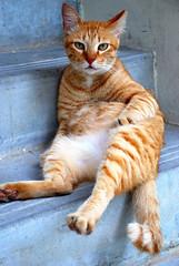 i'm the boss (cactusbeetroot) Tags: cats blog potd jesters naturesfinest ahwong supershot abigfave bestofcats anawesomeshot independentphotos superhearts thebiggestgroupwithonlycats