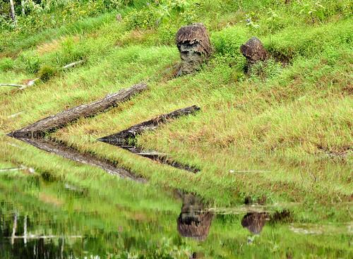moai amazônico by fotolivre