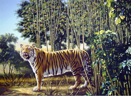 the hidden tiger illusion