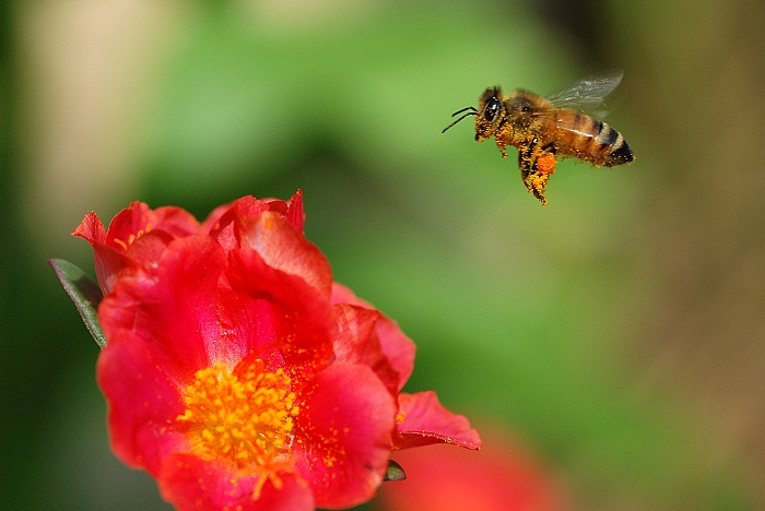 蜜蜂0025
