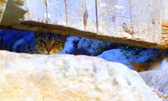 Madriguera. (debrara7) Tags: cat searchthebest paseo v gato irene madriguera minino allyouneedislove vpaseofotogrfico