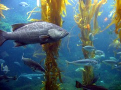 ocean life sea fish water animals coral wonder aquarium sealife unusual