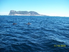 Dolphin Adventure (Gibraltar UK) Tags: world trip vacation costa holiday sol del boat tour dolphin adventure safari dolphins babes trips british tours gibraltar 11102010