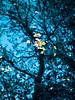 Blu autunno (Un ragazzo chiamato Bi) Tags: blue autumn water leaves foglie pen leaf reflex blu olympus 100mm om acqua autunno zuiko f28 ep1 riflesso 43adapter sorgente licinetto propriolivicinoapalmira