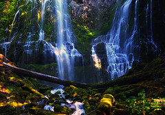Proxy Falls in Oregon (Deby Dixon) Tags: green tourism nature wet water oregon forest spectacular photography moss travels nikon hiking hard it hike waterfalls cascades got worth deby allrightsreserved 2010 proxyfalls deadfall naturephotographer sisterswilderness travelphotographer debydixon idahophotographer debydixonphotography slowexposuretripod