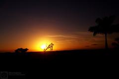 (renatabenia) Tags: light sunset sky plants sun luz sol nature natureza cu prdosol nuvens coqueiro kodakm863