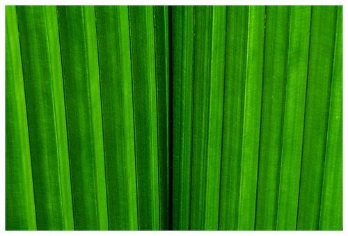 green-palmleaves
