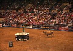 (.emily.) Tags: audience clown crowd bull dirt rodeo pbr tulsa bullriding roping barrelman flintrasmussen builtfordtoughseries