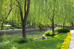 beijing park  lovely to see.... lovely to be walking in it