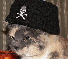 Happy Talk Like a Pirate Day! (Sister72) Tags: cat skull kitty explore cap precious pirate matey crossbones talklikeapirateday ahoy arrrrrrr morerum theevileye abigfave