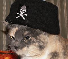 Happy Talk Like a Pirate Day! (Sister72) Tags: cat skull kitty explore cap precious pirate matey crossbones talklikeapirateday ahoy arrrrrrr morerum theevileye abigfave