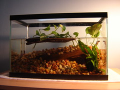 Newt tank 09/07 by moarplease, on Flickr