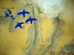 wild banana child (placeinsun) Tags: blue birds yellow graffiti prague czechrepublic walls wildbananachild