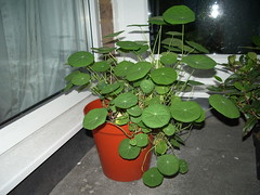 Nasturtiums doing a treat!
