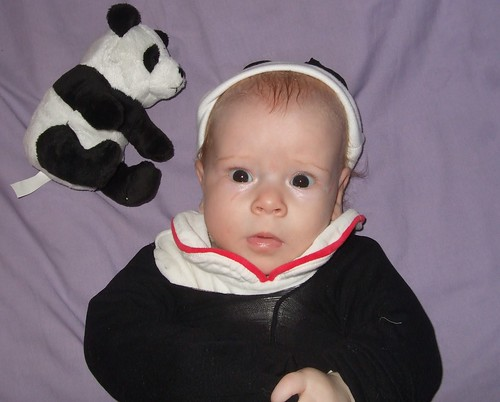 panda baby 024