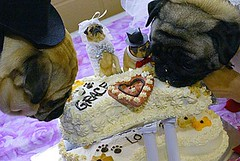 the doggie bridegroom and bride together with the wedding cake