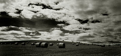 Scottish Hay Bales (steffanmacmillan) Tags: vacation blackandwhite bw holiday monochrome field wales landscape mono scotland honeymoon moody cloudy fife britain cymru lowlands monochromatic slidefilm bn welsh grainy ektachrome cylinders campervan haybales blairgowrie haying naturalmente cymro outstandingshots easternscotland gs645s outstandingshot campervanning aplusphoto