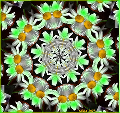 GREEN DAISY...! (MONKEY50) Tags: flowers white black color colour green art colors yellow digital colours kaleidoscope mandala fantasy paintshoppro soe kaleidoscopes mandalas