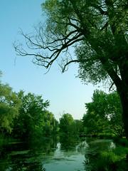 Tall Ponds