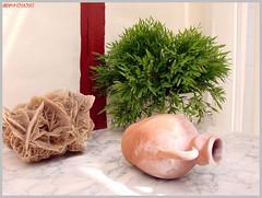 Stillleben Pflanzen - Still Life Plants