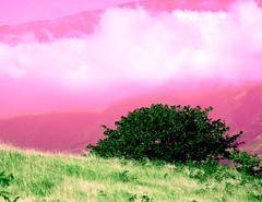 Pink View (Simplexmunditiis) Tags: 2005 pink usa cloud mountain green colors grass hawaii bush nikon hill maui nikond50 simplexmunditiis