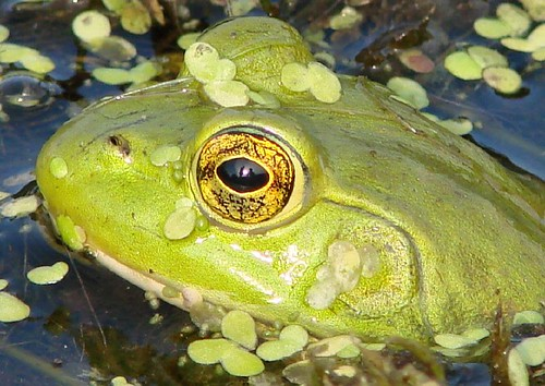 self reflection in frog's eye