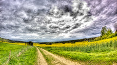 119/365: ROLLING HILLS (Austrian Alex) Tags: blue green nature field yellow clouds landscape fisheye lane mustard 365 hdr gamewinner canon50d fisheyefriday thechallengefactory superherochallenges herowinner samyang8mm pregamewinner pregamesweepwinner