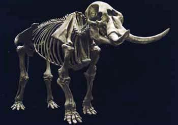 Cohoes Mastodon