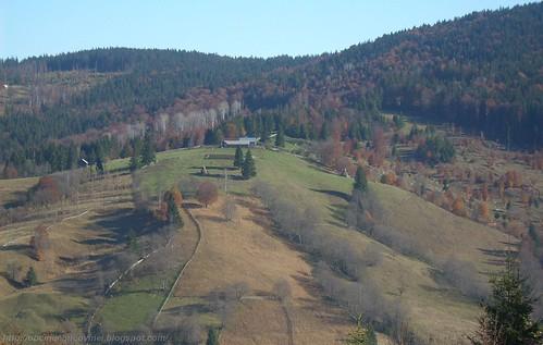 Bucovina  , Molid 2010 (18)