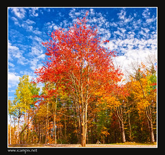 New Hampshire Autumn Glory (iCamPix.Net) Tags: autumn mountains water canon nationalpark rocks vermont fallcolor fallcolors connecticut massachusetts maine newengland newhampshire autumncolors fallfoliage rhodeisland professionalphotographer naturesfinest supershot mywinners abigfave platinumphoto anawesomeshot colorphotoaward fleursetpaysages xmaxprocessing xmax3880