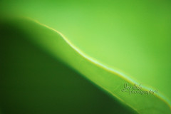 (joy_sale) Tags: november abstract macro green leaf dof magnifyingglass zen edge simplicity 2010 nov2010 g10nov01