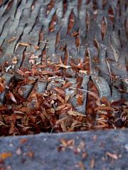 rest...tomorrow will be better (nadiobolis) Tags: wood trip viaje family familia madera venezuela merida hammock rest familiar descanso hamaca cuero chinchorro hojuelas