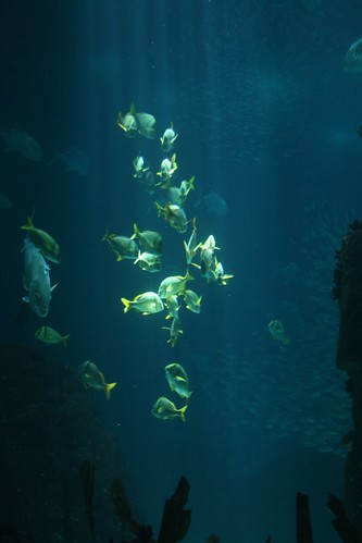 fish portugal choir aquarium tour lisbon ics