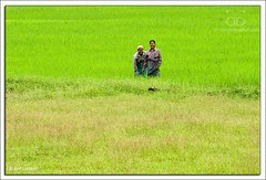 Green warriors (Arif Siddiqui) Tags: people india portraits farmers places tribes assam northeast arif arunachal tribals siddiqui jairampur arunachali