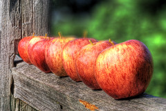 Seven apples sitting on a fence