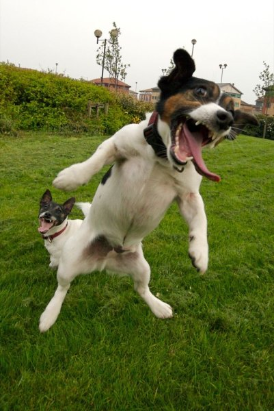 994528479 4bf8ab2e32 o Funniest Animals