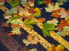 Autumn / Fall Leaves - yellow lines