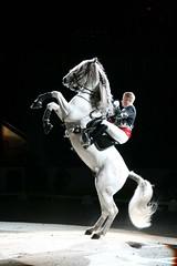 IMG_2241 (BlackWyld) Tags: horse white caballo cheval lo riding cal cavallo cavalo pferd kin stallion hest andalusian riders hevonen paard cavall kon hast lipizzaner dressage lipizzan hestur perd konj beygir adalucian