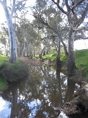 The creek at the bottom of the paddock