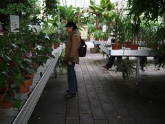 Greenhouse (jovike) Tags: plant iceland greenhouse sland espe
