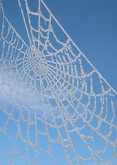 frosty webs (*LINNY *) Tags: