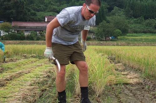 harvesting, go te-chan