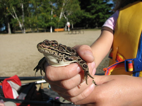 Monster leopard frog