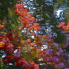Ordinary Miracle! / Miracle habituel! (Denis Collette...!!!) Tags: autumn trees wild canada reflection leaves fleurs automne river bravo quebec miracle quality rivire reflet qubec bloom arbre soe feuilles sauvage inkstewer magicdonkey rables youreck deniscollette wildriver mapletrees ordinarymiracle sarahmclauchlan miracleland aditchandra world100f