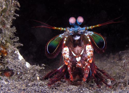 Una isla poblada de criaturas extrañas en Indonesia