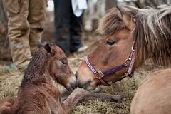 Følling (Tor Even Mathisen) Tags: berg lira hest dyr følling