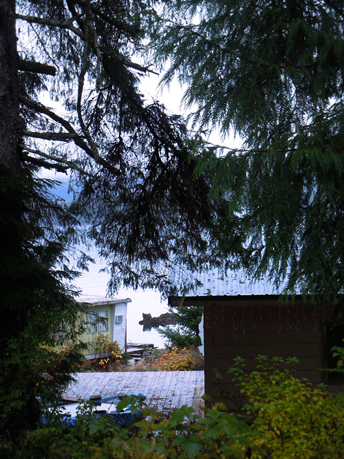 temporary buildings seen through trees, Kasaan, Alaska