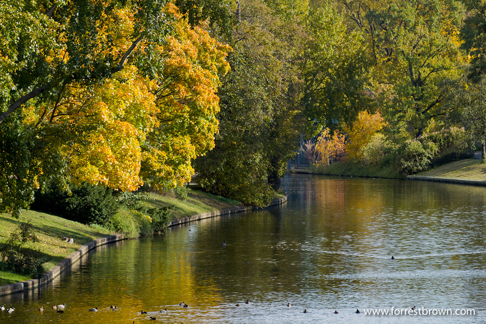 Berlin Germany, Fall, Autumn, Trees, Leaves